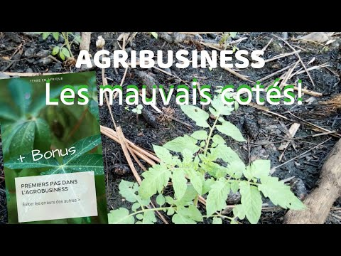 Agribusiness en Afrique | les inconvénients (+bonus)