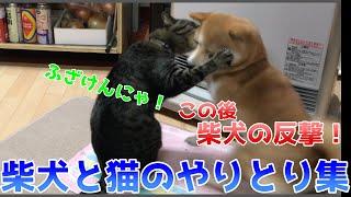 当人達は大真面目!でも見てると笑っちゃう!そんな柴犬ハナと猫クロを集めました!    Shiba And Cat.