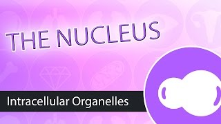 Intracellular Organelles- The Nucleus
