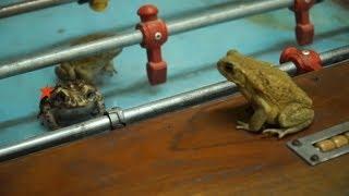 Почему Андрюха ловил лягушек в хостеле? - Особенности национальной работы в Латинской Америке