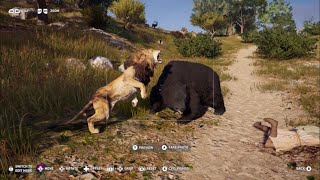 ASSASSINS CREED ODYSSEY- ALL ANIMAL FIGHTS - PART 3!!!!