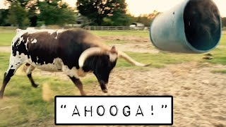 Tex Screams 'AHOOGA!'