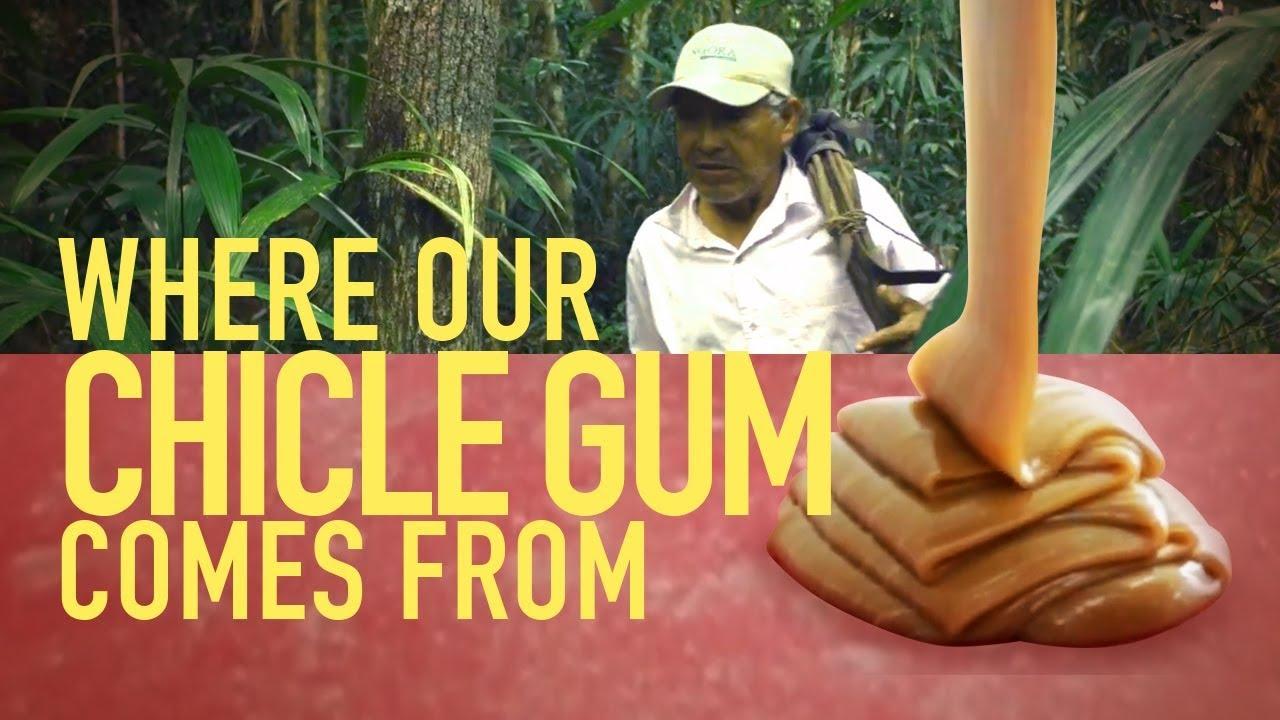CBD Gum, bliv fri for baktusser.