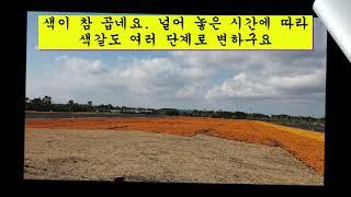 2021 02 07 제주도 서귀포시 성산읍 신천리5번지…