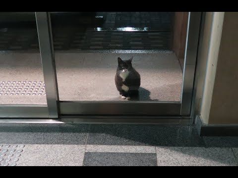 맨날 현관 앞에서 기다리는 턱시도 길고양이