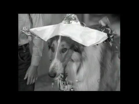 "Download Lassie - Episode #259 - ""The Badger Game"" - Season 8, Ep. 4 - 10/1/1961"