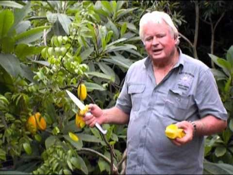 Carambola Star Fruit Richard Wilson Excalibur Palm Beach Rare Fruit Council
