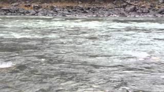 Риболовля на харіуса на річці Катунь. Осінь 2015