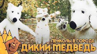 ДИКИЙ МЕДВЕДЬ / ПРИКОЛЫ В ГОРОДЕ  Мишка в эфире