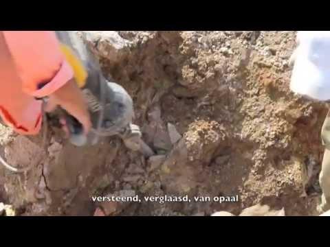 Lesbos - versteende boom bevrijd