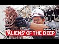 'Aliens' of the Deep: New Marine Animals Found in Seas off West Java | CNA Insider