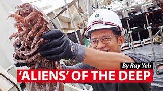 'Aliens' of the Deep: New Marine Animals Found in Seas off West Java   CNA Insider