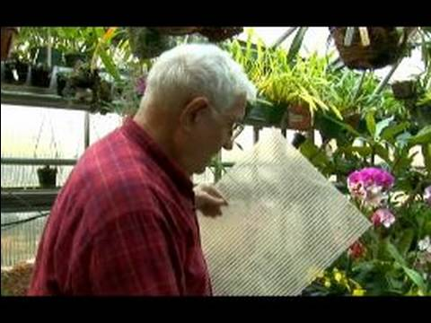 How to Grow Orchids: Growing Orchids Indoors : Pro...