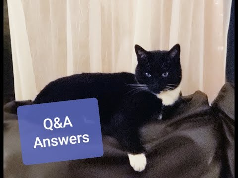 Answers To All Your Questions ,, Q&A Follw Up