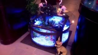 Amazing Round Table Aquarium