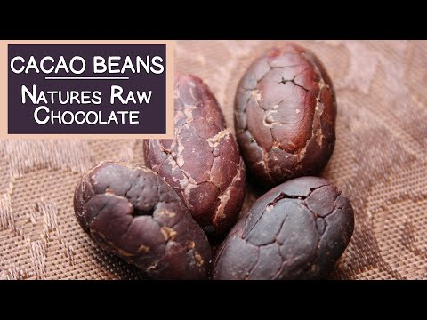 Cacao Beans, Natures Raw Chocolate