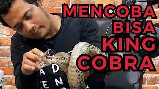 GOKIL! KING COBRA TERBESAR DUNIA MASUK STUDIO GUE (PANGGIL PANJI PETUALANG)