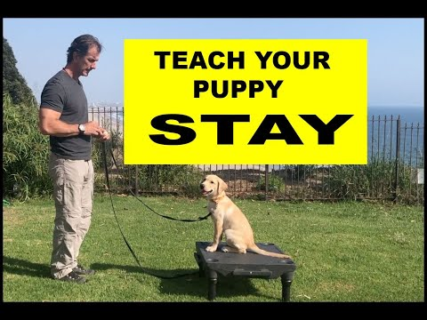 Teach Your PUPPY to STAY - Dog Training Video