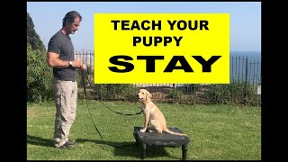 Teach Your PUPPY to STAY  Dog Training Video