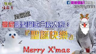 灰鸚鵡曼尼唱聖誕歌,祝大家聖誕快樂!Merry Christmas