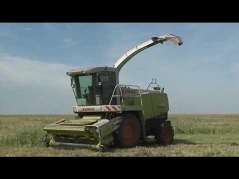 CLAAS JAGUAR в хозяйствах Омской области
