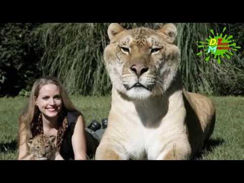 Los Animales Híbridos Más Increíbles del Planeta | Listas ...