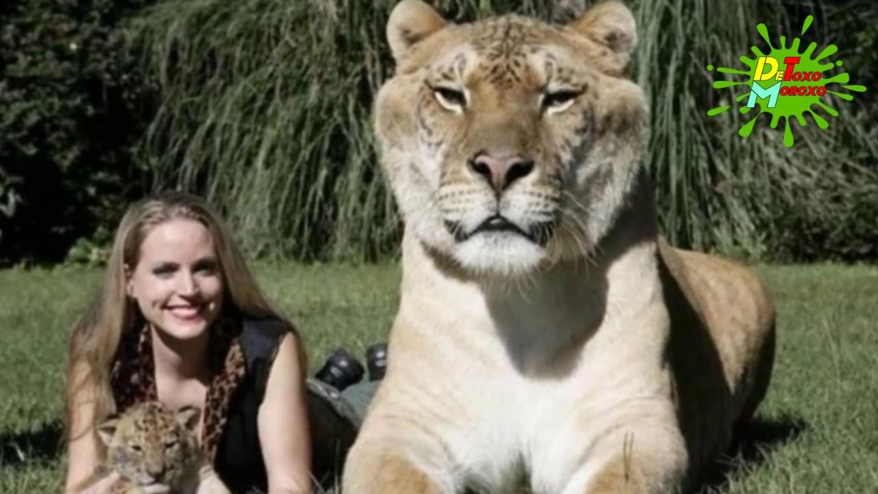 Los Animales Híbridos Más Increíbles del Planeta   Listas DeToxoMoroxo