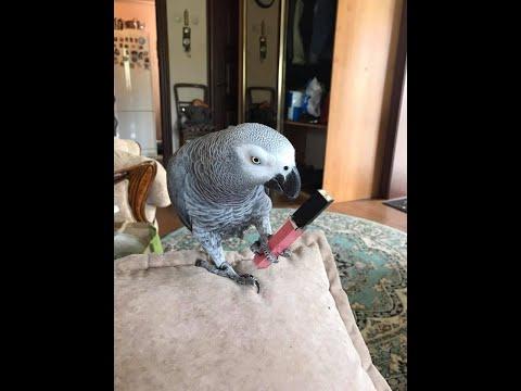 Попугай Жора грустит с мамой