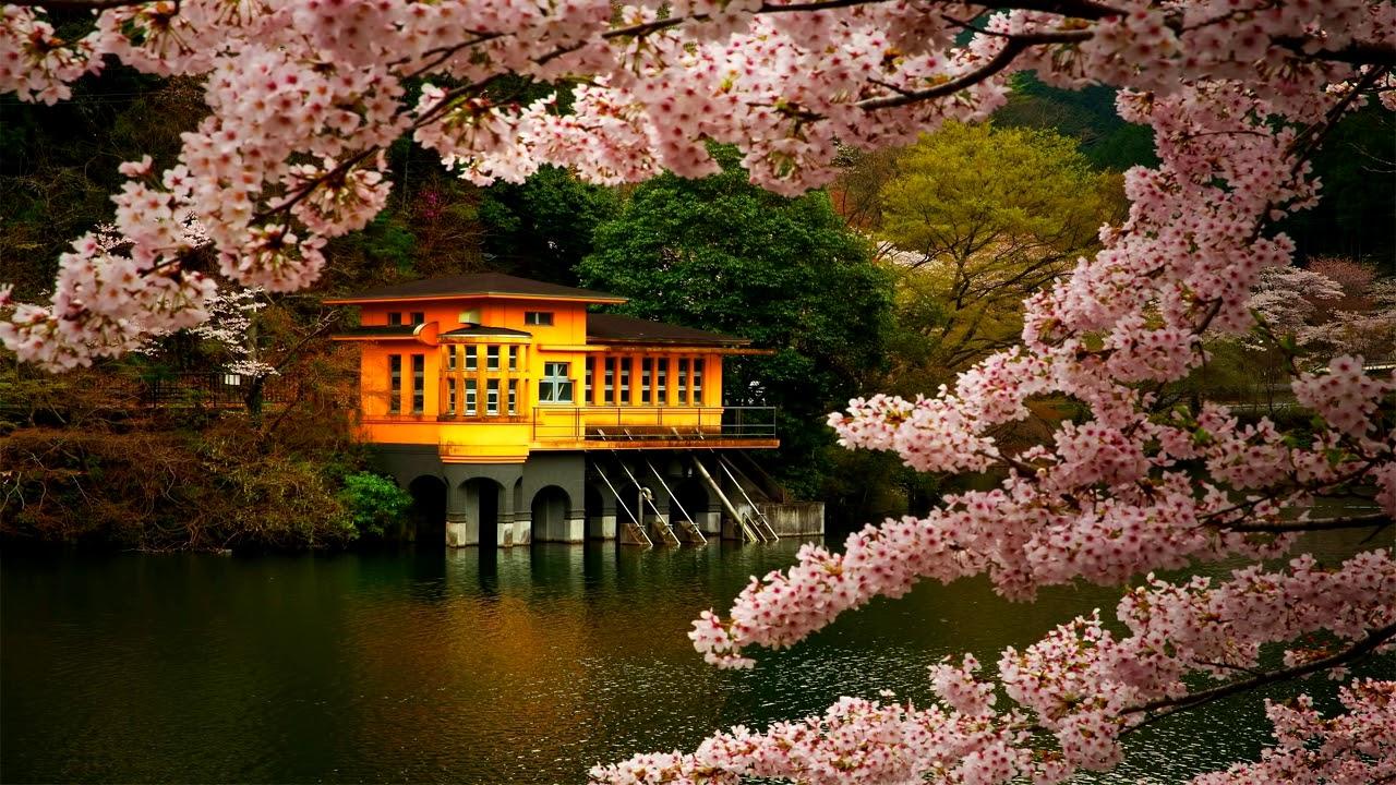 Zen Meditation Music  Japanese Flute Music  Relax