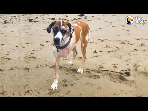 Huge Dog Defies All Odds  | The Dodo