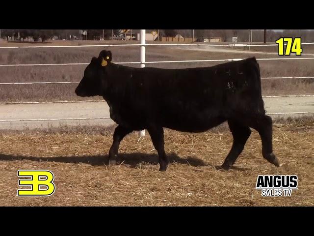 Benoit Angus Lot 174