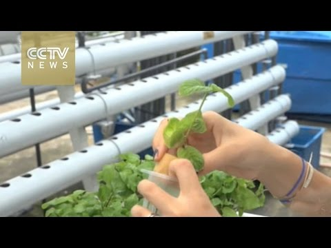 Singapore farming provides sustainable solutions