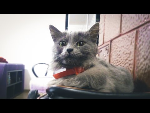BRAKE BROKEN!!!=) ТОРМОЗА НЕ СРАБОТАЛИ!!! =)  Chats drôles. Funny cats 2016.