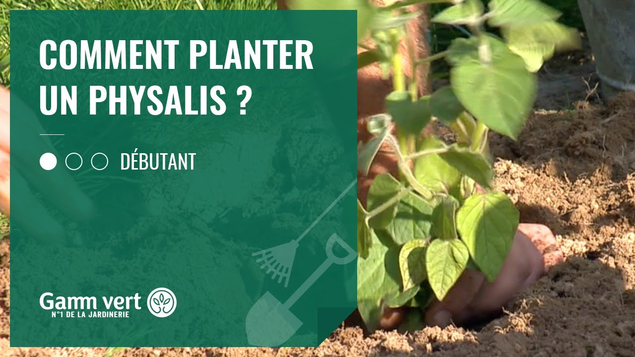 tuto comment planter un physalis jardinerie gamm vert