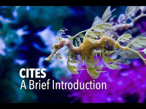 CITES; A Brief Introduction