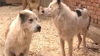 Приют для животных Шанс (АлабайSOS), Краснодарский край, Ейск