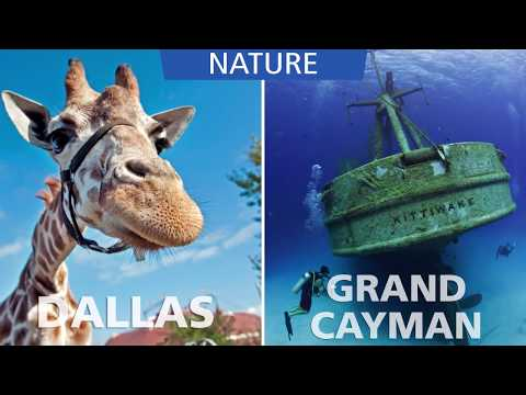 Fly nonstop between Dallas and Grand Cayman aboard Cayman Airways