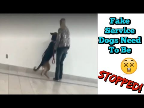 Fake Service Dogs, Dog Attack, Dog Poops In Walmart And More!