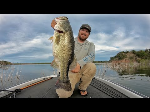 The Bass Cast | Your home for all things Bass Fishing