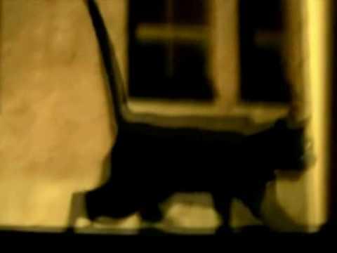 Faster Kill Pussycat Roman Hunter Remix