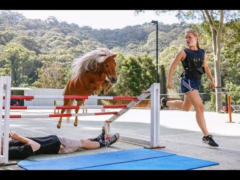 "Crunch ★ ""FREE JUMPING 4"" ★ Miniature Horse Jumping Champion 4K"