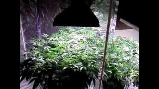 Splifferous ~ OMMP ~ The Bloom Boom Room ~ 7/6/12 Update