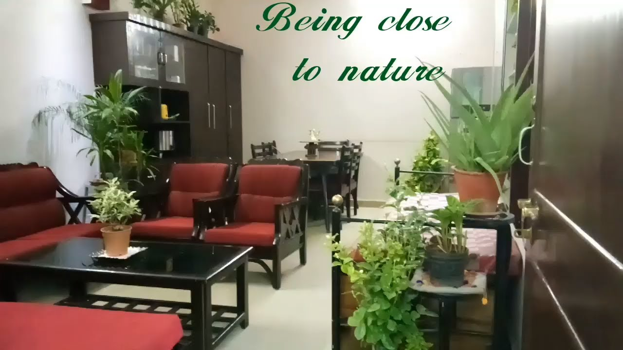 Indoor Plants In Indian Living Room Youtube
