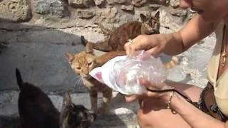 МАГИЯ ГРЕЦИИ И КОШКИ Часть 4 / GREECE, MAGIC, CATS Part 4