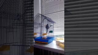 Наш Попугай Арчик Говорит плохие слова Весёлый и говорящий попугай