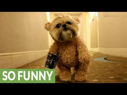 Munchkin the Teddy Bear visits Miami