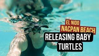 El Nido Turtle Hatchlings Released! Nacpan Beach Glamping