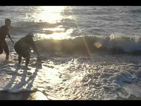 Surf fishing shark release bethany beach delaware shark for Delaware surf fishing