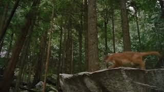 Сумерки 5 (трейлер )