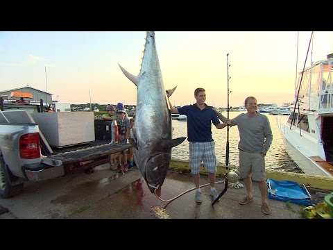 710-lbs. Tuna Caught In Newfoundland With Rod And Reel